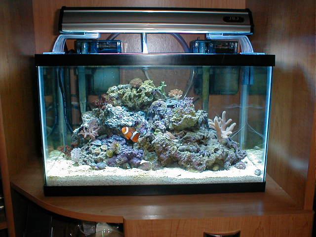 Que se hace primero for Accesorios para acuarios marinos
